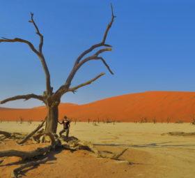Abgestorbener Baum im Deadvlei