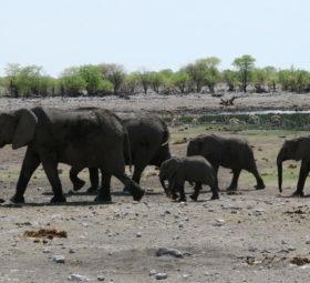 Eine Elefantenfamilie am Wasserloch im Ethosha-Nationalpark