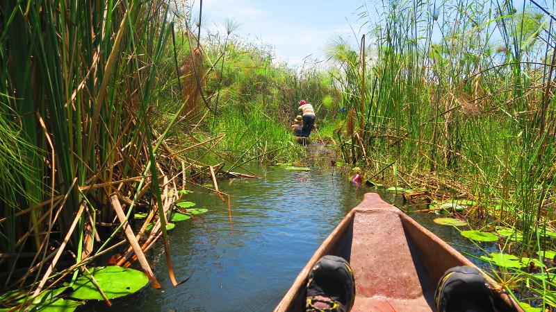 Einbaumboote auf einem der Kanäle im Okavangodelta in Botswana