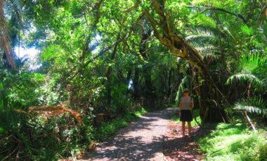 Ein Blick auf den tiefgrünen Regenwald an den Victoria Falls