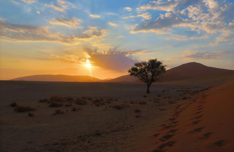 Blick auf den Sonnenaufgang hinter einem Baum am Fuß der Düne 45