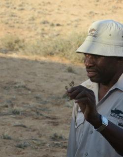 Ein San von Sossus-on-foot in Namibia erklärt eine Pflanze