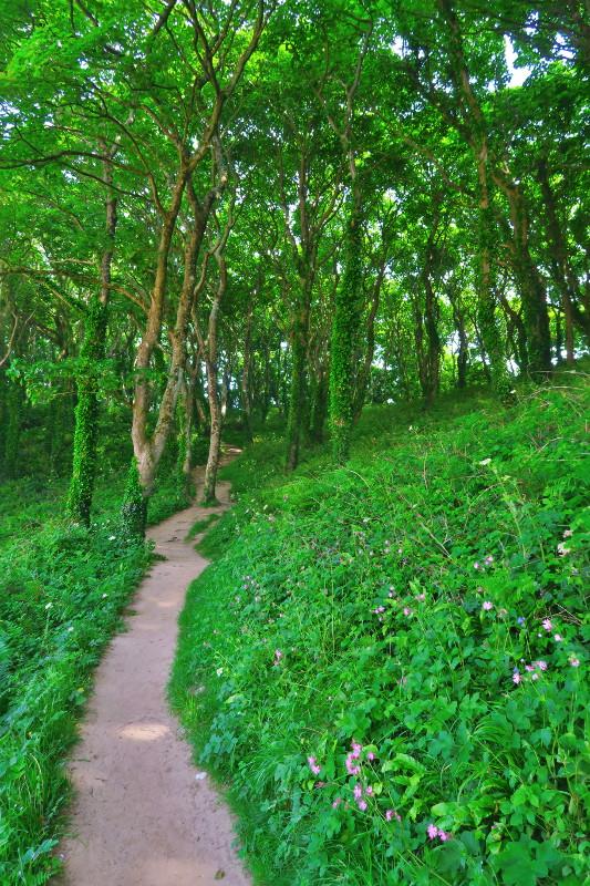 Kleiner grüner Zauberwald hinter der paradiesischen Barafundle Bay