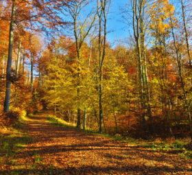 Indian Summer auf der Schwäbischen Alb: ein Wanderweg zwischen bunt belaubten Bäumen