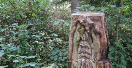 Ein abgesägter Baumstamm, in den jemand ein Gesicht geschnitzt hat