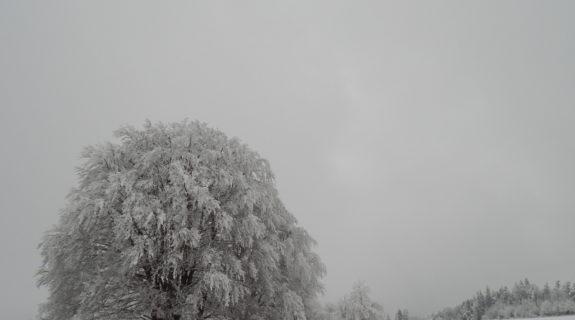Ein riesiger, verschneiter Baum auf der Schwäbischen Alb
