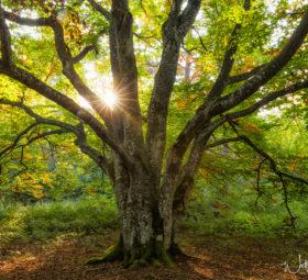 Wandelnde Herbstfarben in Bildern