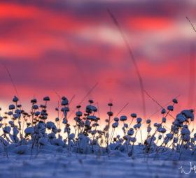 Das Farbenspiel des Winters