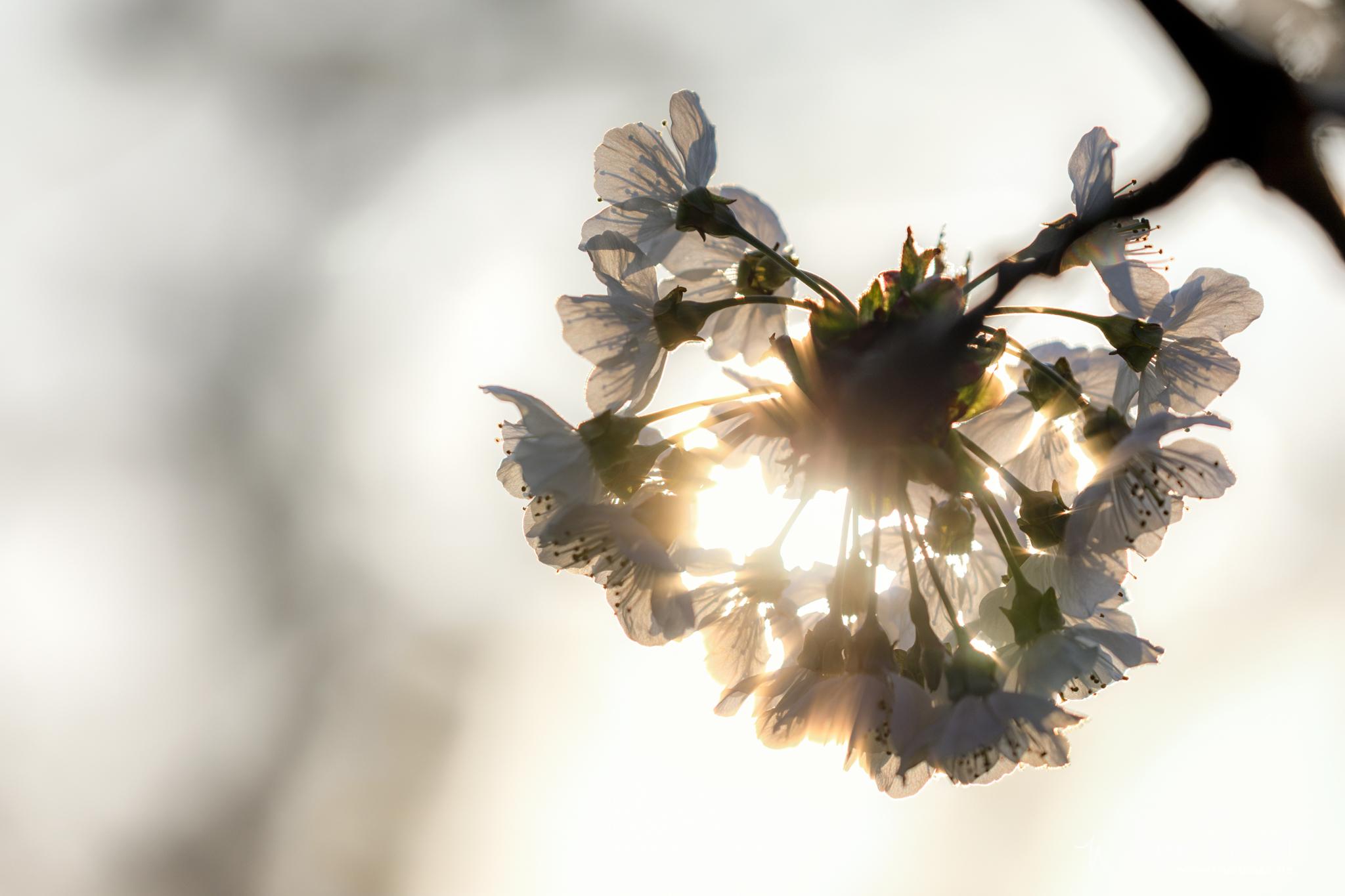 Frühlingserwachen. Der Frühling auf der Alb in Bildern