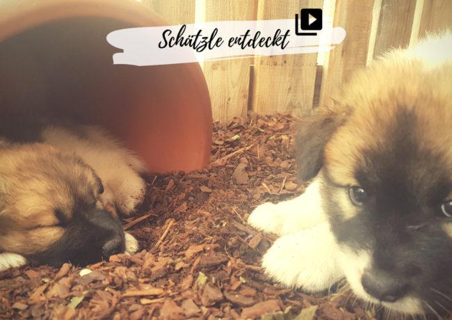 Hundeliebe und Elo-Welpen