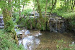 Das Donntal bei Lenningen – Sinterterrassen und Urwald von morgen