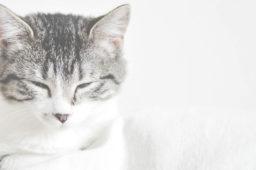 Die verschwundenen Katzen von Wellendingen