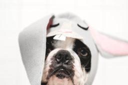 Sieben lustige Osterbräuche aus aller Welt