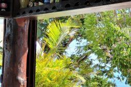 Die schöne Wilde: Auszeit auf La Gomera