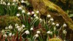 Sieben Wanderungen im Frühling