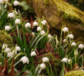 Sieben Wanderwege für den Frühling
