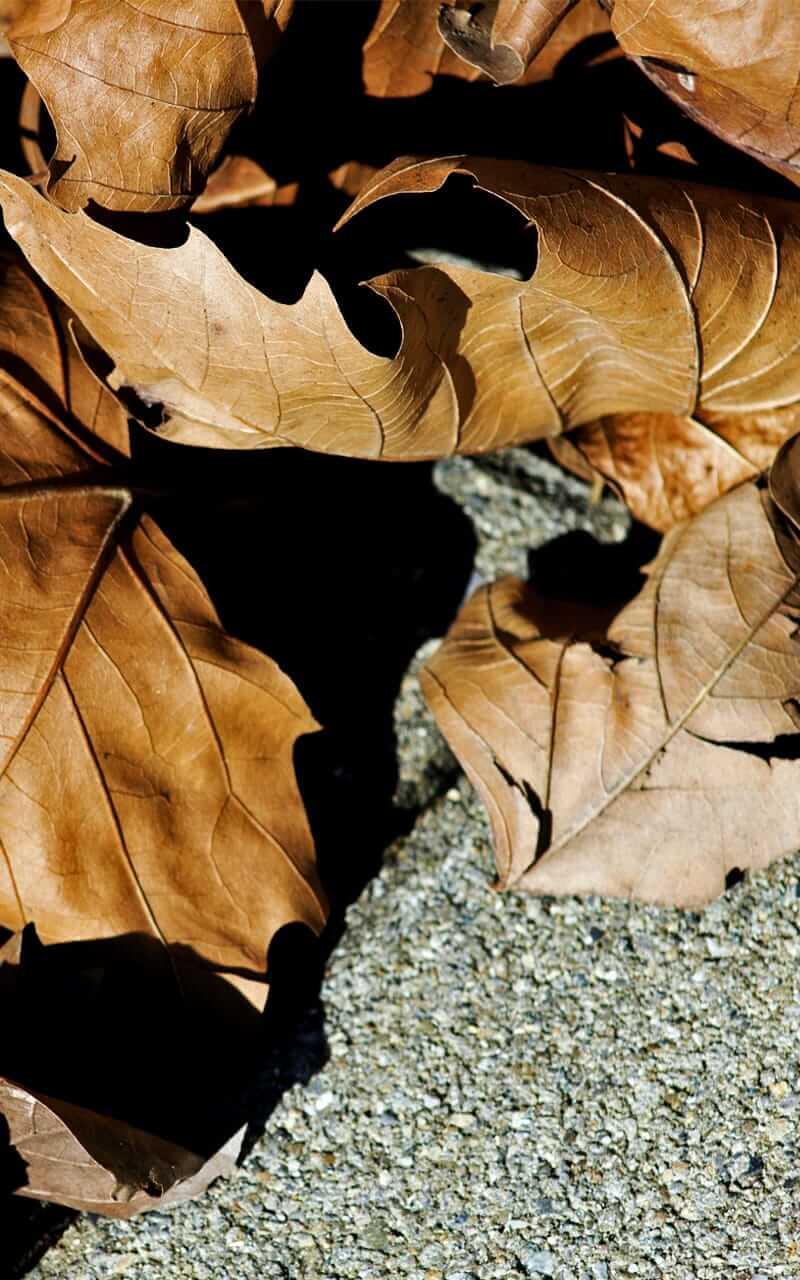 """""""Fotografie ist die Sprache, die auf der ganzen Welt verstanden wird."""" – Fotograf Stefan Neigum"""